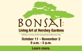 Bonsai_19 image