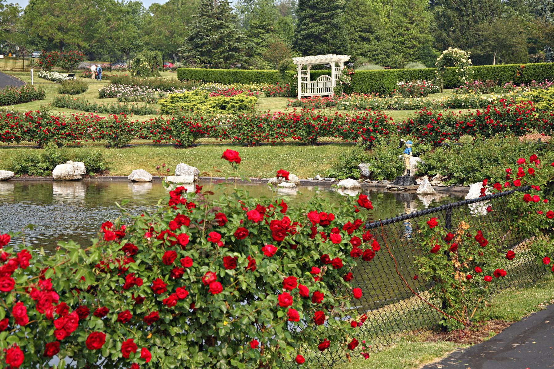 Roses In Garden: Hershey Gardens
