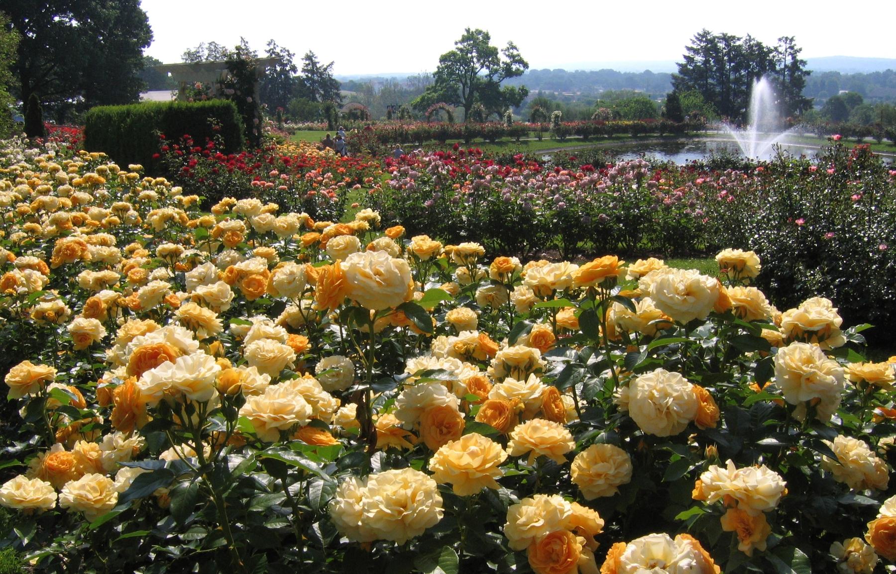 Fine Sidewinder Elitch Gardens Ornament - Brown Nature Garden ...