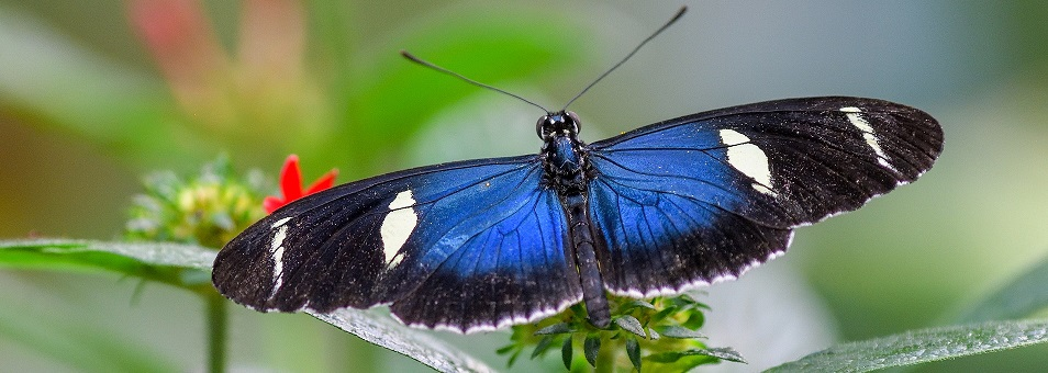 See hundreds of butterflies from around the world