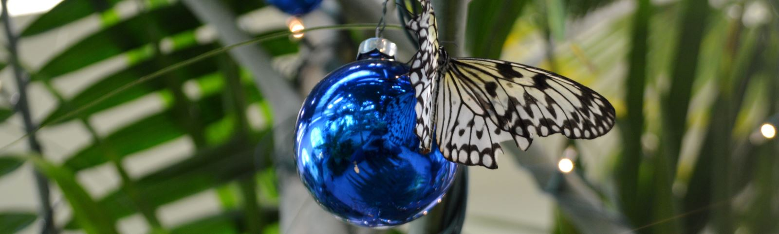 The Butterfly Atrium Celebrates the Holidays!